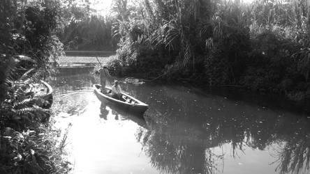 Selva de Amazonia