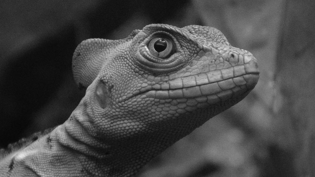 reptile  de la selva by h2j