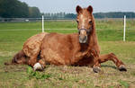 Lying down pony stock 2 by ByMelody