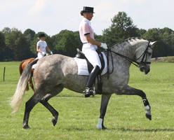 Dressage stock 5 by ByMelody