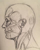 The Muscular System of the Human Head by The-Octopus-Author
