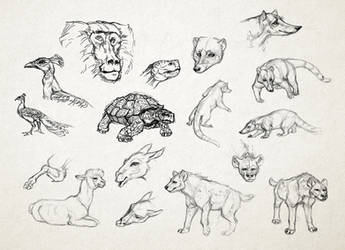 Miscellaneous Animal Sketches by GTPanda