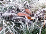 Frost 4