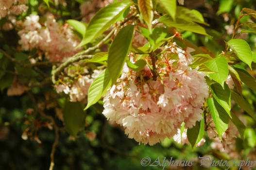 Blossem in spring