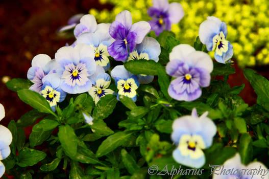 Spring '13 20