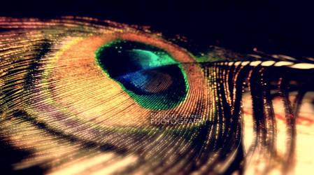feather  morpankh by sidli d8tjocg