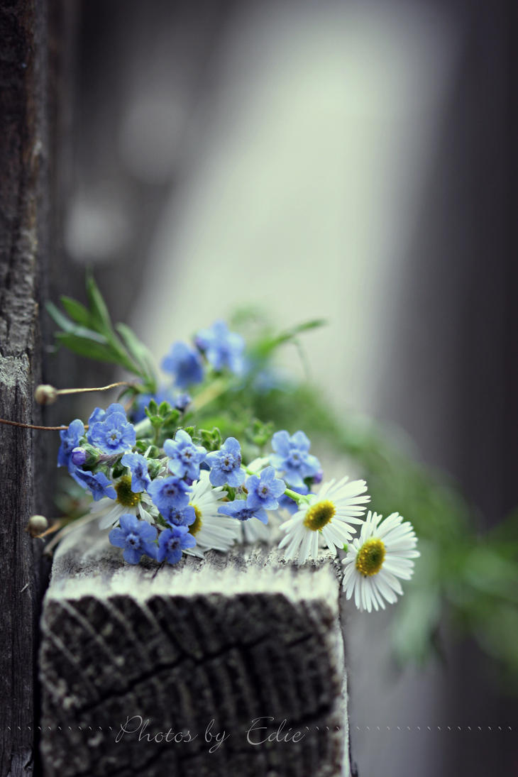 Forget Me Not by 1001G