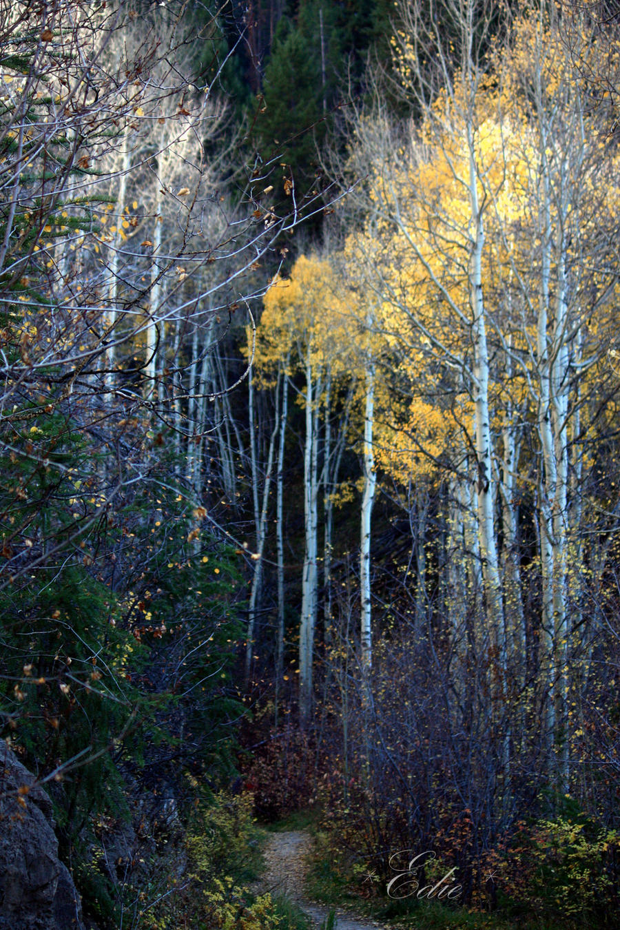 EagleVail to Beaver Creek by 1001G