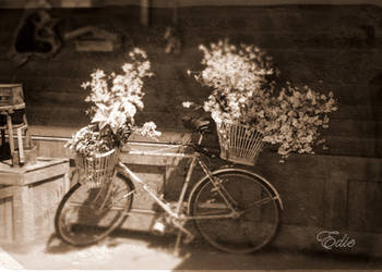 Baskets full of posies by 1001G
