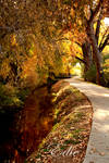 On Golden Creek II