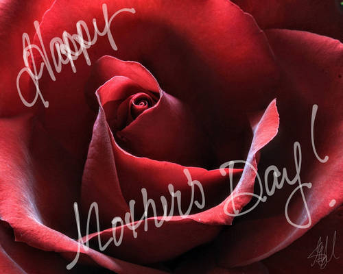 To all the wonderful mother's