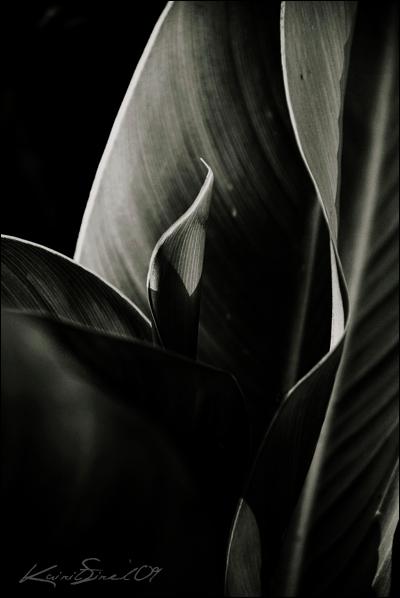 Leaf by CrazyMurdock1