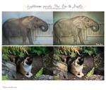 The Zoo and Dapple