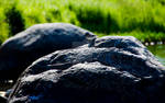 Bird on the stone