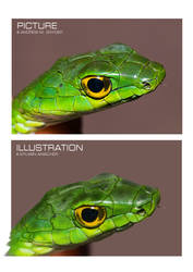 Snake head digital painting comparison by CaptainSmog