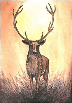 The sun of the deer