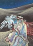 Bedouin and arabian horse