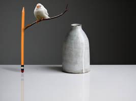 bird dreams by MaryCapogna