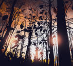 Forest-scent-autumn-premade
