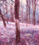 Spring-is-here-premium-bg