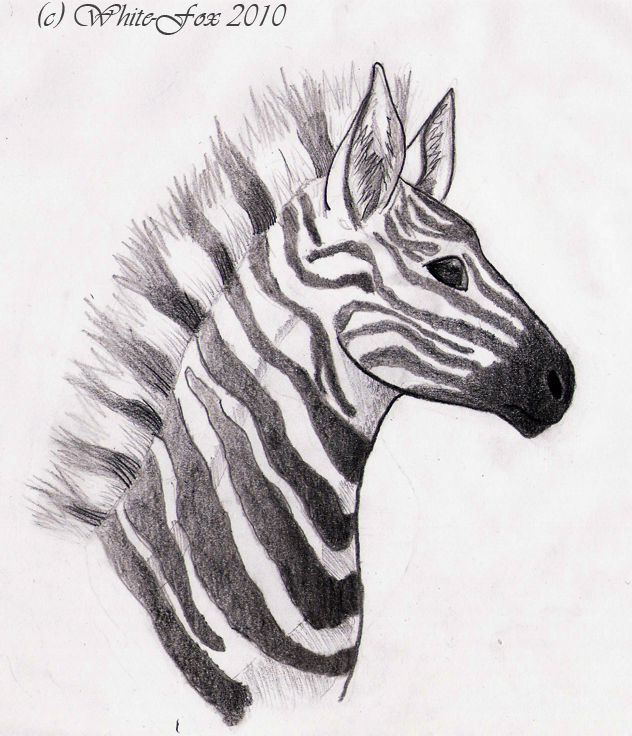 zebra drawing - photo #17