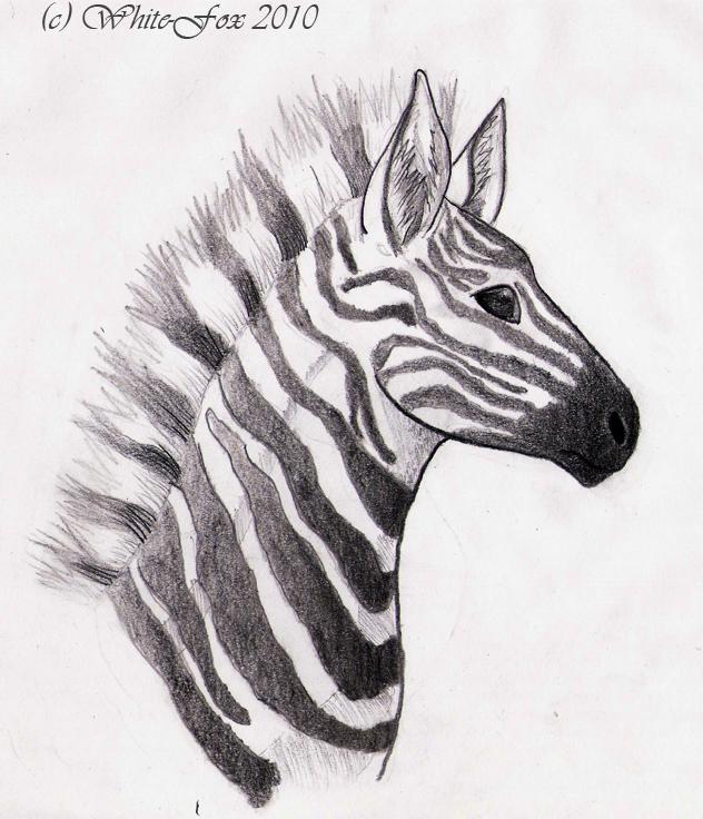 Zebra Head by Vovix on DeviantArt