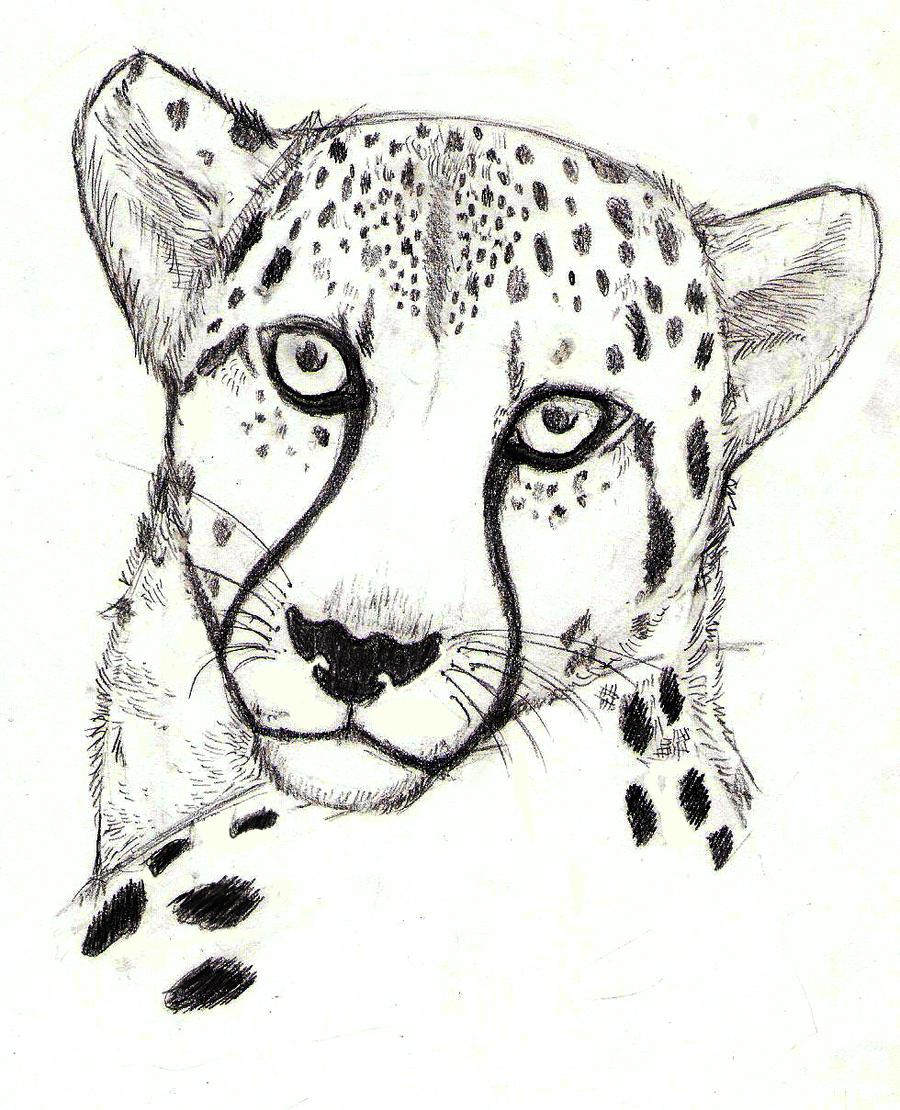 Cheetah Head Drawing Cheetah at by vovix