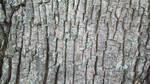 Bark by dogatemymanuscript