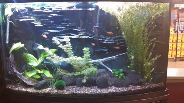tankfish | Explore tankfish on DeviantArt