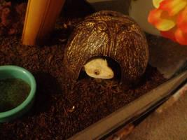 Butterscotch in her Coconut by dogatemymanuscript