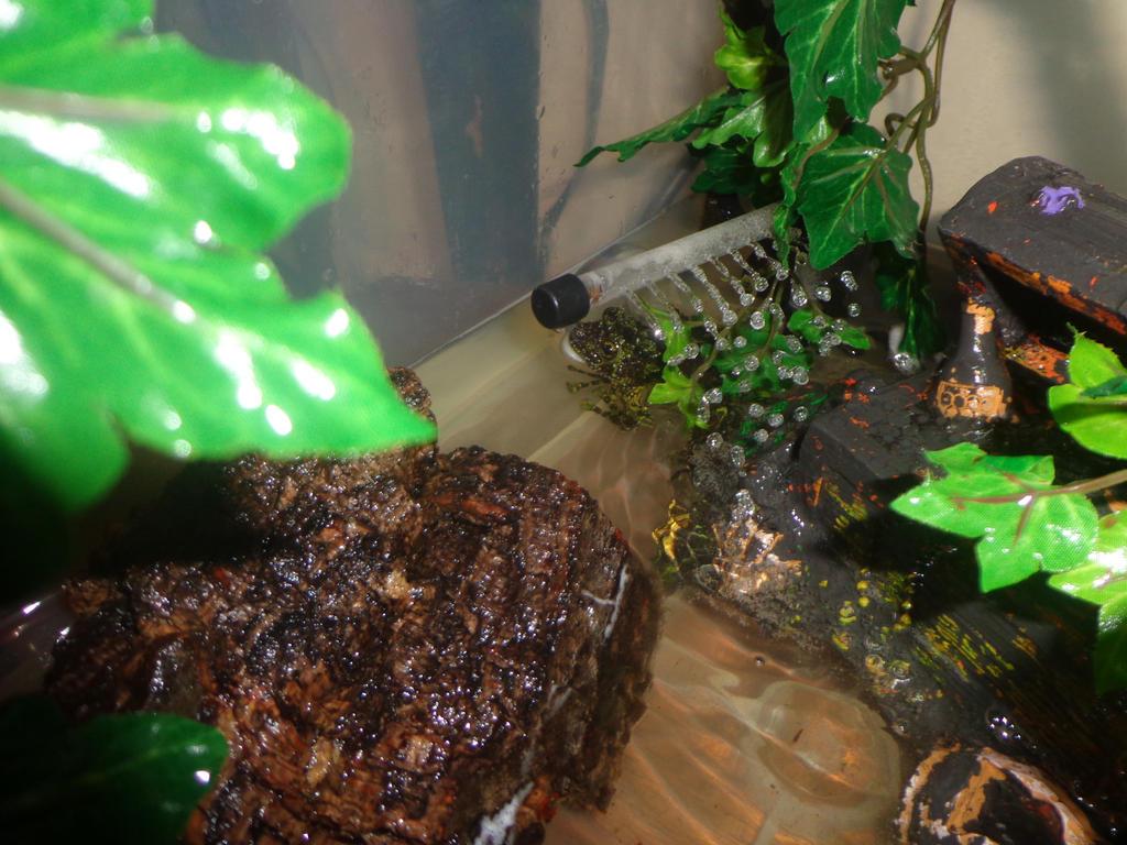 Mossy Frog at Home by dogatemymanuscript