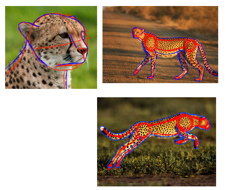 Cheetah Anatomy Study by KonekoKreations on DeviantArt