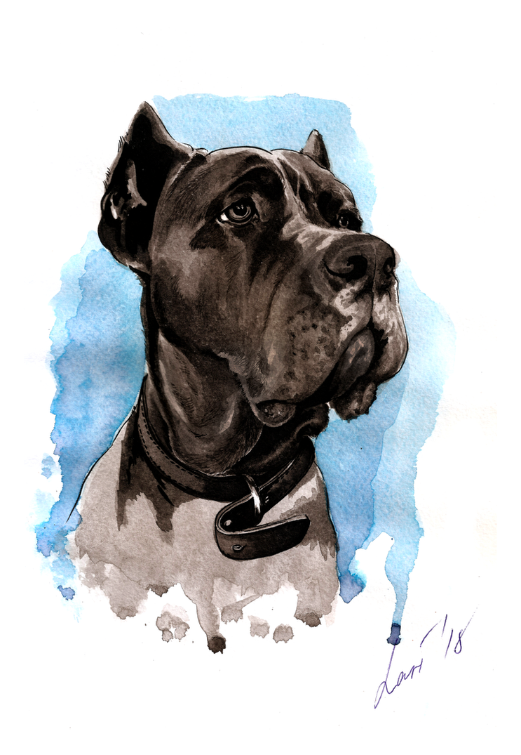 Cane Corso 2 by lariel-istime