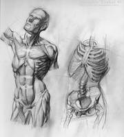 Anatomy Study by SalvadorTrakal