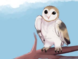 Owl by polaskia