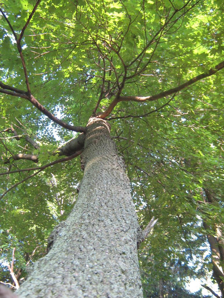 vertical tree by xXxAngelOfPainxXx on DeviantArt
