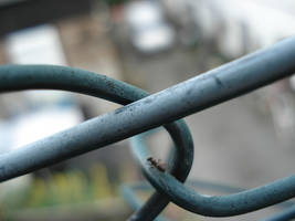 ant on a chain-link fence by ToTac