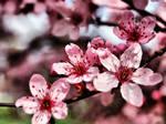 Spring in Poli 2 by spoii