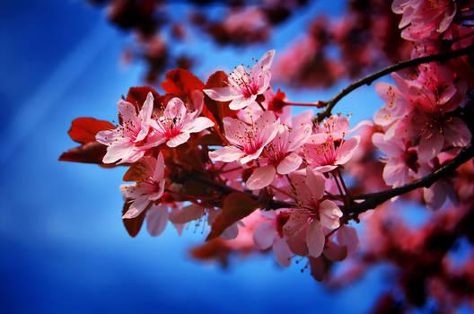 Spring in Poli 4