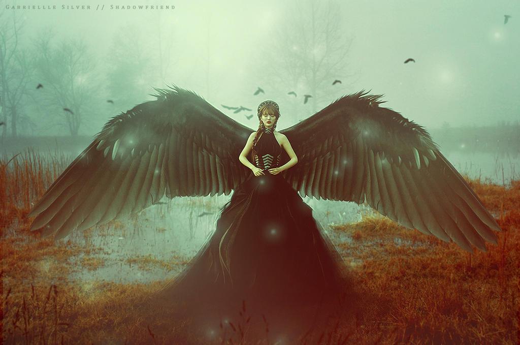 Black Swan by shadowfriend