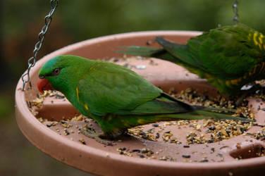 birds1 by secret-luck-stock