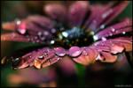 Drops in Love...