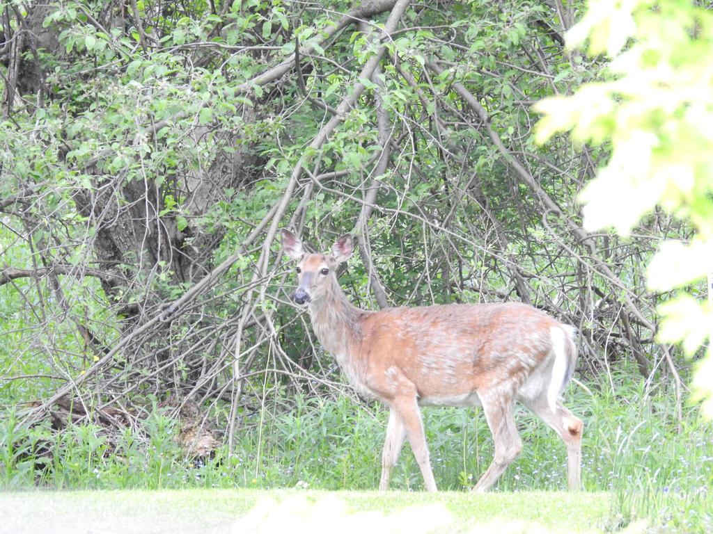Dear o Deer by CLWS70