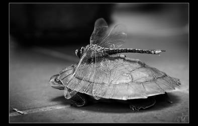 Mr Turtle and the Dragonfly