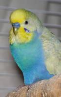 Zippy da Bird by Wooblet