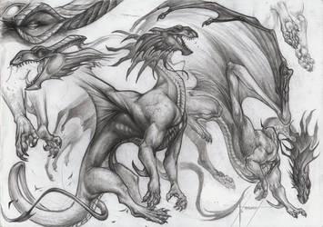 A4 FP cmm Dragon
