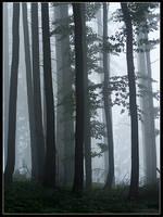 On Elven Path by Tindomiel-Heriroquen