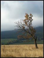 The Tree by Tindomiel-Heriroquen