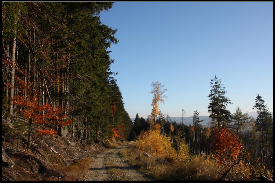 Autumn Road by Tindomiel-Heriroquen