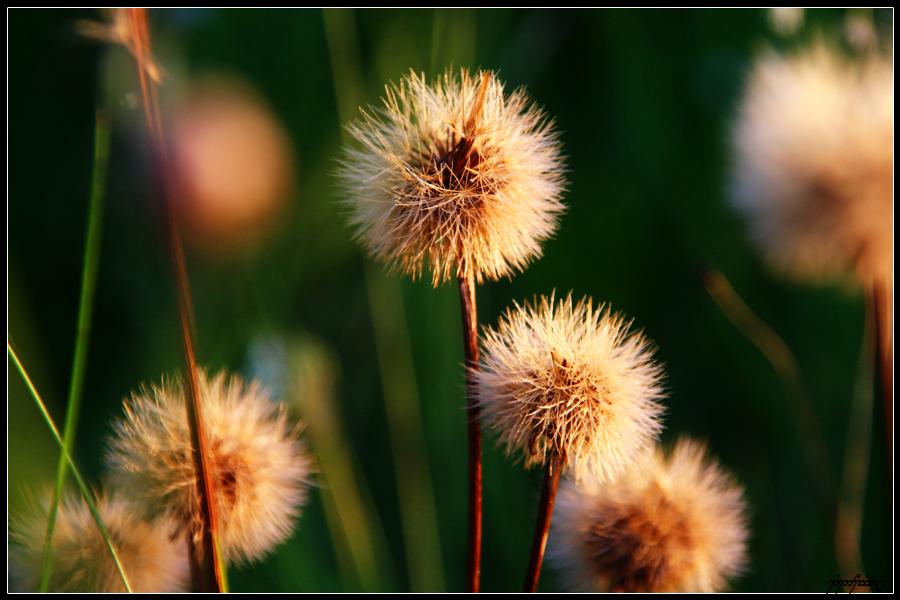 Light In Grass by Tindomiel-Heriroquen